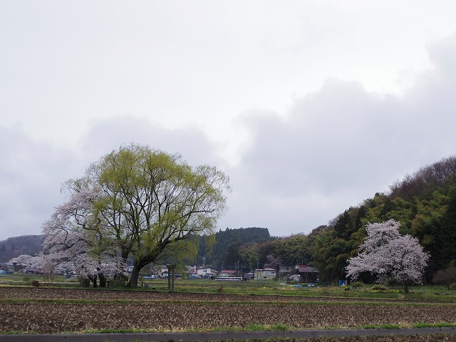 A2201.jpg